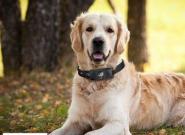 狗狗专属:MOTO推出宠物智能项圈Scout5000