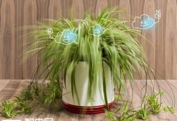 屌炸天!这样的花盆确定不是在吹牛?