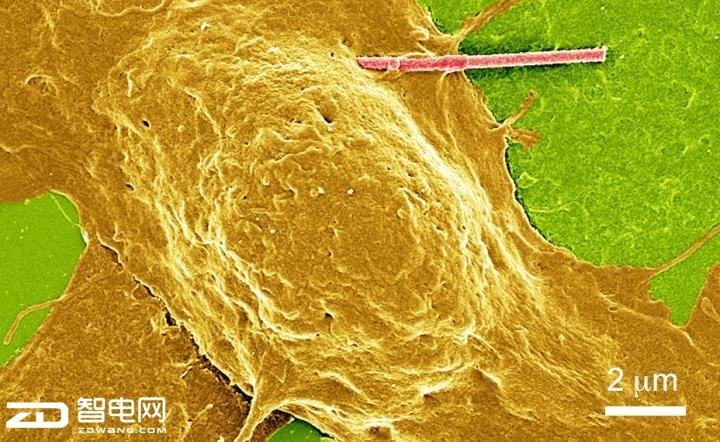 光敏纳米线或有助于大脑疾病的治疗