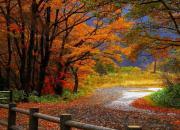 十月最佳拍照手机  拍出金秋红叶竟不输相机