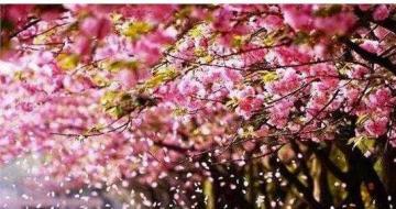 三月赏春不耽误  让你的少女心爆棚