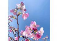 花枝烂漫 扇舞春天 用微单记录美好景色