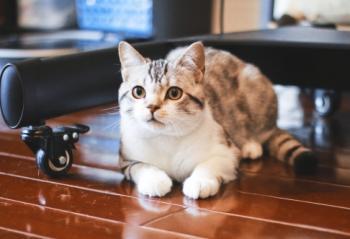 小小宠物撬动千亿级产业,家电企业有哪些新玩法?