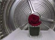"""15秒让玫瑰绽放!来自海尔""""微蒸汽空气洗""""的力量"""
