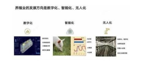 """华为推""""智慧养猪""""""""南泥湾""""计划  不依靠手机也能存活"""