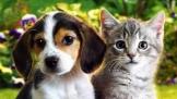 """""""宠物喂养""""成为新单身人群消费趋势的重要风向标"""
